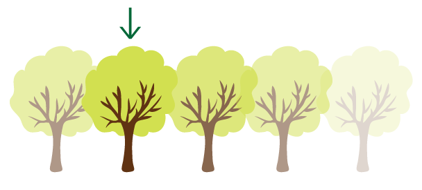illustration depicting tree placement
